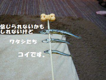 P1580161.jpg