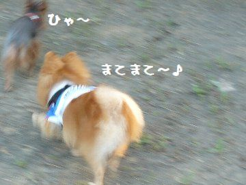 P1760788.jpg