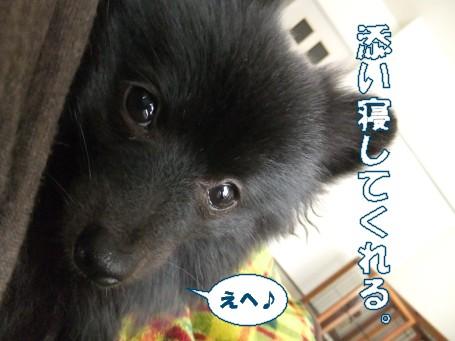 20110318_1.jpg