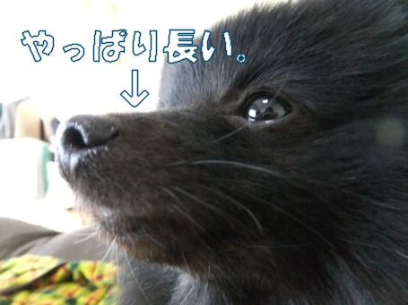 20110330_3.jpg