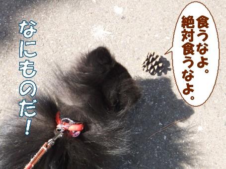 20110401_5.jpg