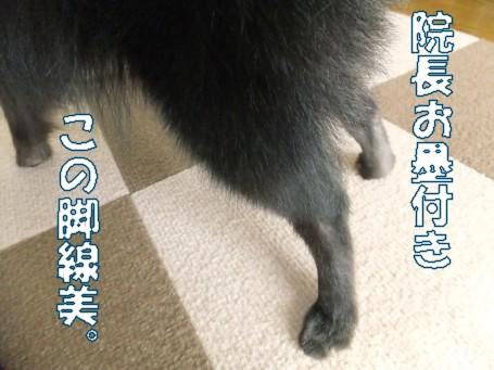 20110405_2.jpg