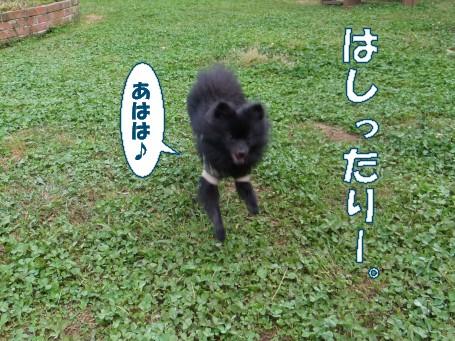 20110508_5.jpg