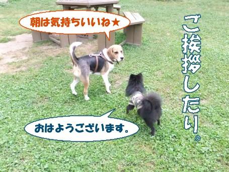 20110508_6.jpg