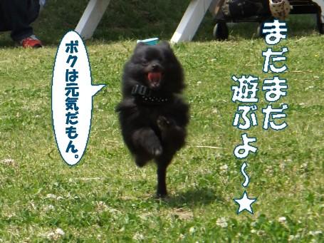 20110509_2.jpg