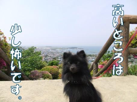 20110509_5.jpg