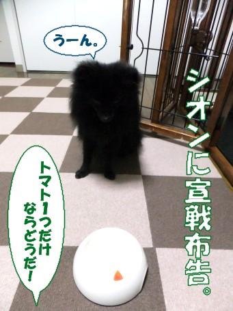 20110513_4.jpg