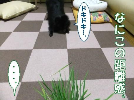 20110516_6.jpg