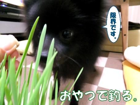 20110516_7.jpg