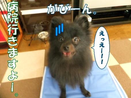 20110519_2.jpg