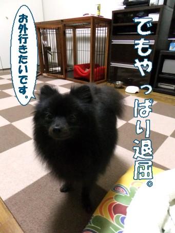 20110529_5.jpg