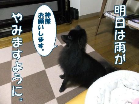 20110529_6.jpg