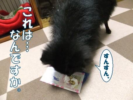 20110530_3.jpg