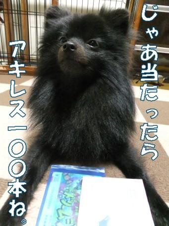 20110530_4.jpg