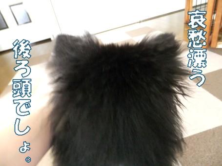 20110603_4.jpg