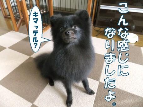 20110604_8.jpg