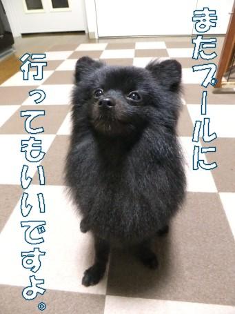 20110604_9.jpg