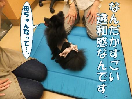 20110611_4.jpg