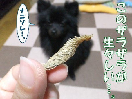 20110619_3.jpg
