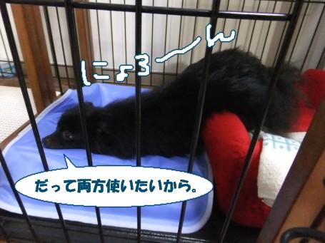 20110701_1.jpg