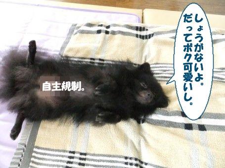 20110701_4.jpg