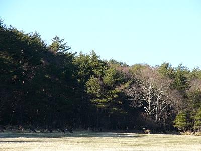 鹿に出会いました