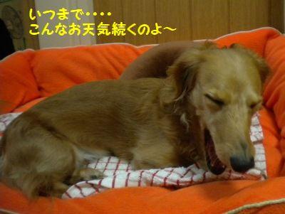 DSCN5941_20111215223003.jpg