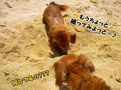 DSCN6206_20120709143007.jpg