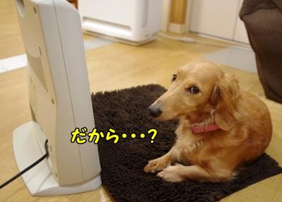 IMGP0053_20111223182300.jpg