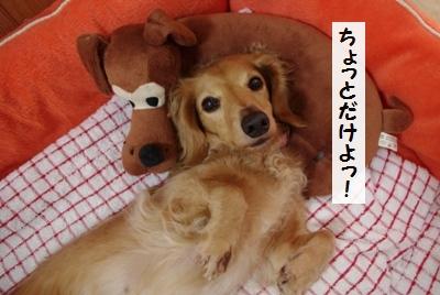 IMGP0061_20111110182537.jpg