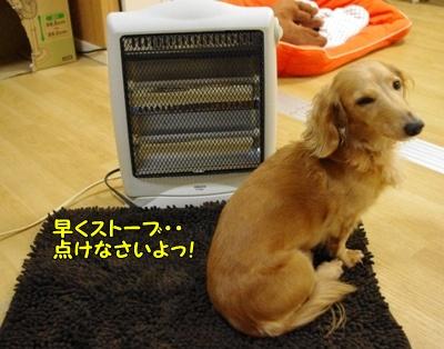 IMGP0070_20111223220951.jpg