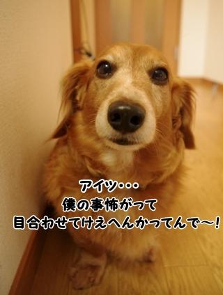IMGP0206_20120315163042.jpg