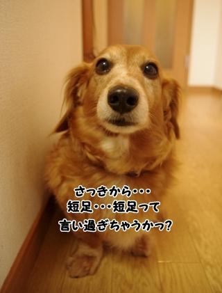 IMGP0208_20120315174116.jpg