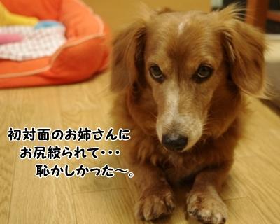 IMGP0846_20120329145507.jpg