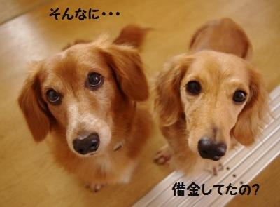 IMGP0946_20111201180427.jpg