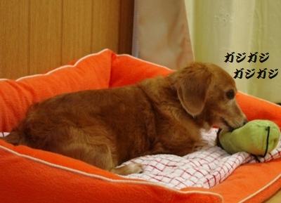 IMGP1044_20111202165918.jpg