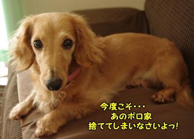 IMGP6111_20120305134924.jpg