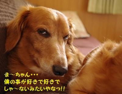 IMGP9038.jpg