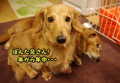IMGP9864_20120410135127.jpg