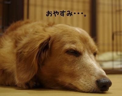 IMGP9869_20111119174408.jpg