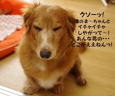 IMGP9869_20111221182707.jpg