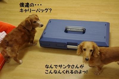 IMGP9959_20111225173439.jpg