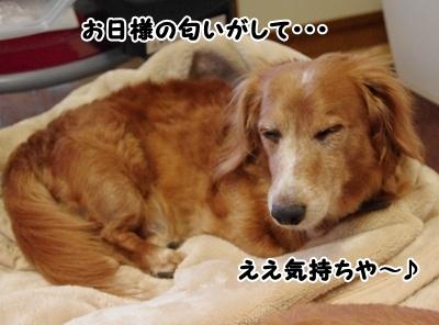 _IGP0109.jpg