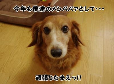 _IGP6370.jpg