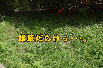 _IGP9533.jpg