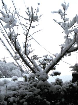 3.12朝、雪JPG
