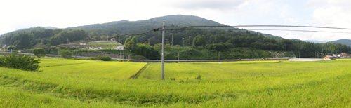 吉和の稲田