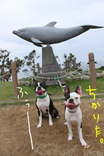 ponuz鳥羽 239_edited-1