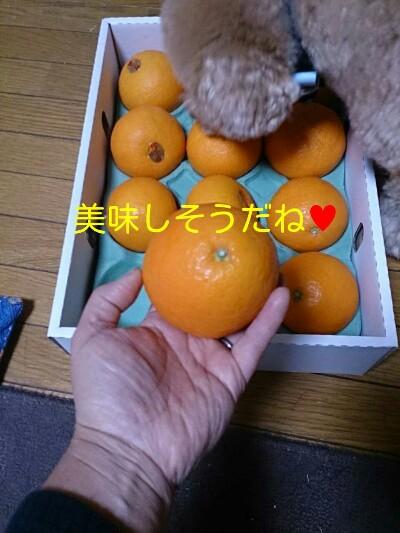 20141202201301418.jpg