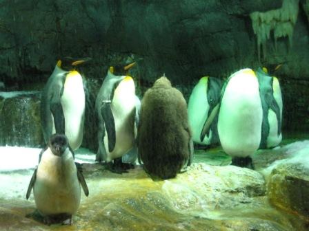 220313ペンギン